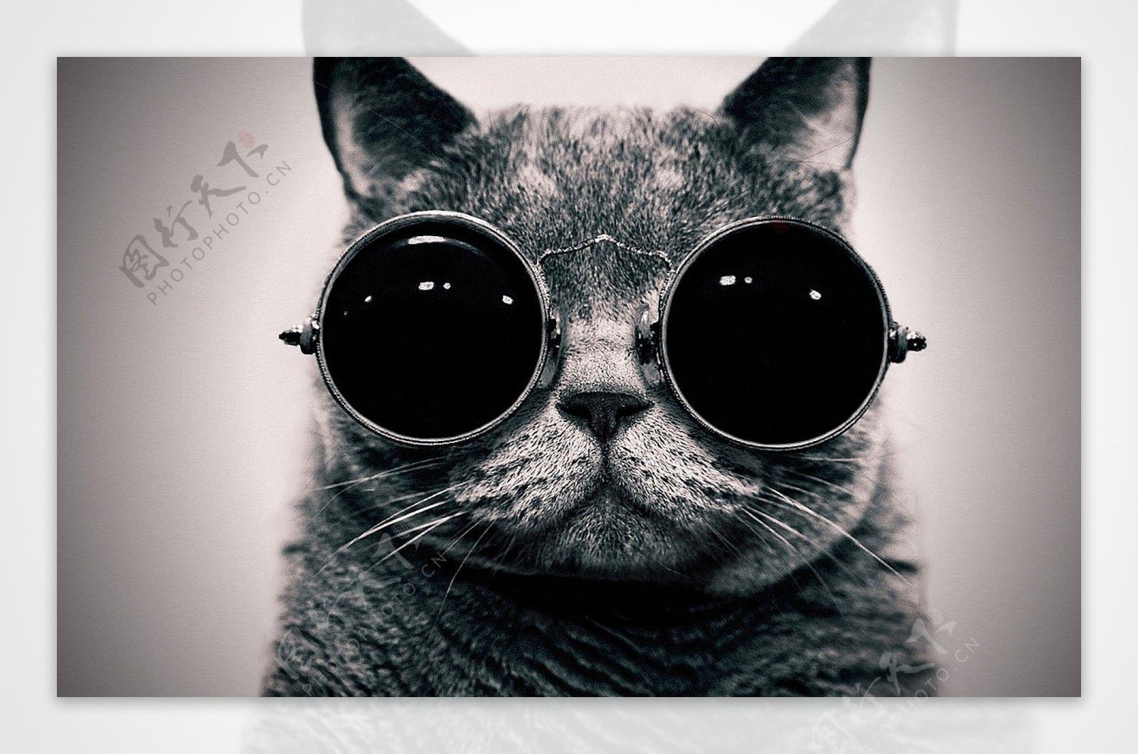 个性炫酷猫星人背景