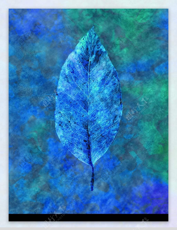 蓝色叶子图片