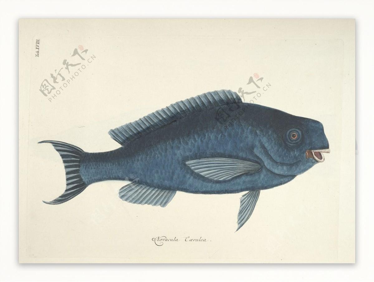 鱼类手绘插画海洋生物手绘